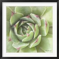 Framed Garden Succulents II Color