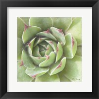Framed Garden Succulents II Color