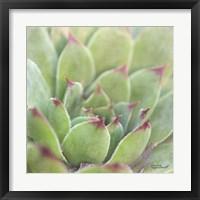 Framed Garden Succulents I Color