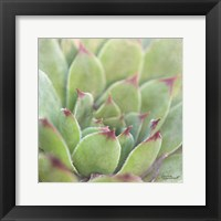 Framed Garden Succulents I Color