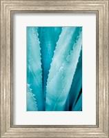 Framed Abstract Agava III Color