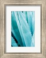 Framed Abstract Agava IV Color