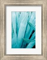 Framed Abstract Agava I Color