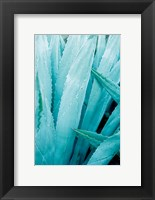 Framed Abstract Agava I Color