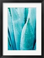 Framed Abstract Agava II Color