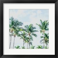 Framed Southern Palms