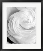 Black and White Petals I Framed Print