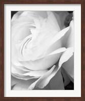 Framed Black and White Petals II