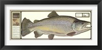 Framed World Record Brown Trout