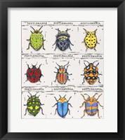 Framed Beetlemania