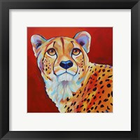 Framed Cheetah