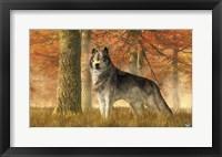 Framed Wolf In Autumn