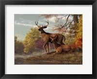 Framed Deer On An Autumn Lakeshore