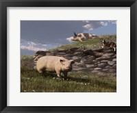 Framed Free Range Pigs