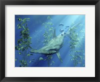 Framed Hammerhead Art