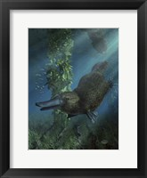 Framed Platypus