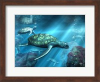Framed Sea Turtles