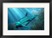 Framed Smiling Dolphin
