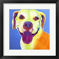 Framed Pit Bull - Daisy