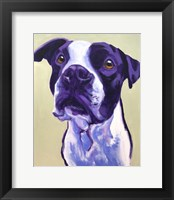 Framed Pit Bull - David