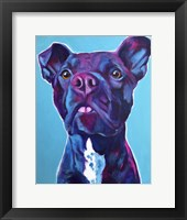 Framed Pit Bull - Neko