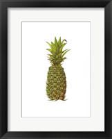 Framed Vintage Pineapple