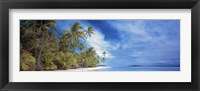 Framed Palms
