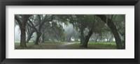 Framed Morning's Mist
