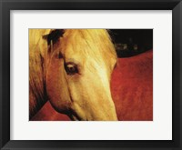 Framed Palomino and Chestnut