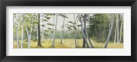 Framed Birch Field