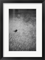 Framed Urban Meadow