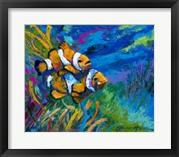 Framed First Date - Smiling Clownfish