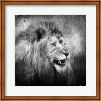 Framed Snarling In Black And White