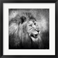 Framed Snarling In Black And White