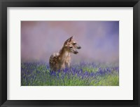 Framed Twin Fawns In The Lavender