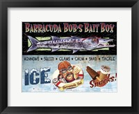 Framed Barracuda Bob