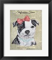 Framed Staffordshire Terrier