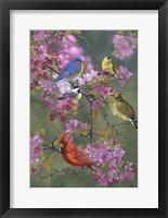 Framed Birds and Blossoms