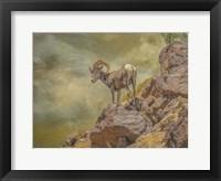 Framed Browns Bighorn