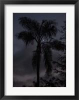 Framed Evening in Balboa