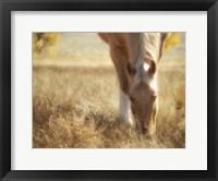 Framed Morning Meadow Light
