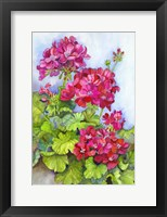 Framed Bold Blue Sky Bright Geraniums