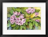 Framed Pink Sunlit Azalea
