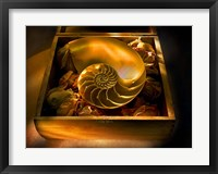 Framed Nautills Shell In Rose Buds