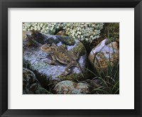 Framed On the Rocks, Great Horned Lizard