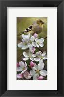 Framed American Gold Finch
