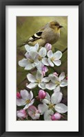 Framed American Gold Finch