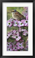 Framed White Throated Sparrow