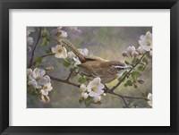 Framed Wren And Apple Blossoms 2