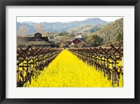 Framed Napa Valley in Winter